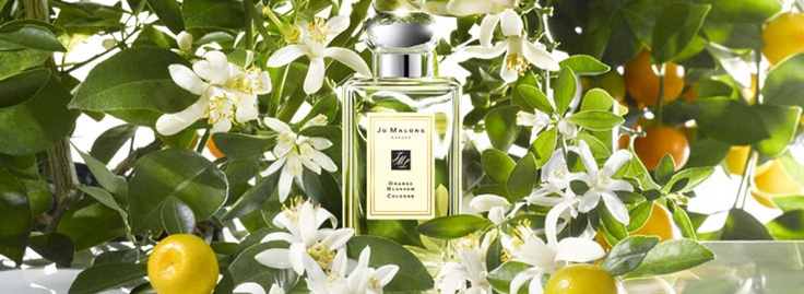 Jo Malone.  Orange Blossom Collection,  A shimmering garden oasis. Clementine flower sparkles over a heart of orange blossom and water lily, with warm undertones of orris and balsamic vetiver. Pure delight.