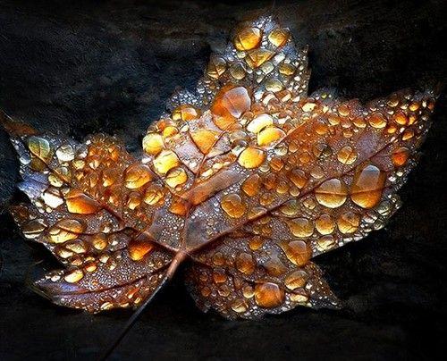 autumn, fall, leaves, color, raindrops