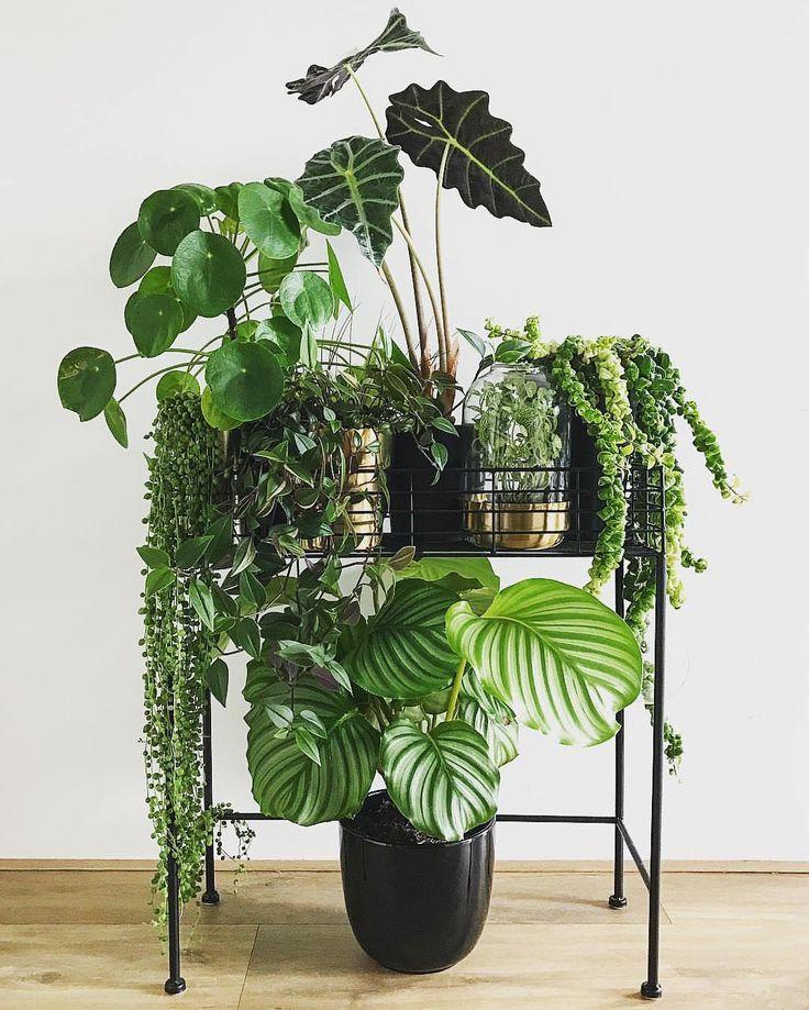 die besten 25 exotische zimmerpflanzen ideen auf pinterest indoor bl hende pflanzen. Black Bedroom Furniture Sets. Home Design Ideas