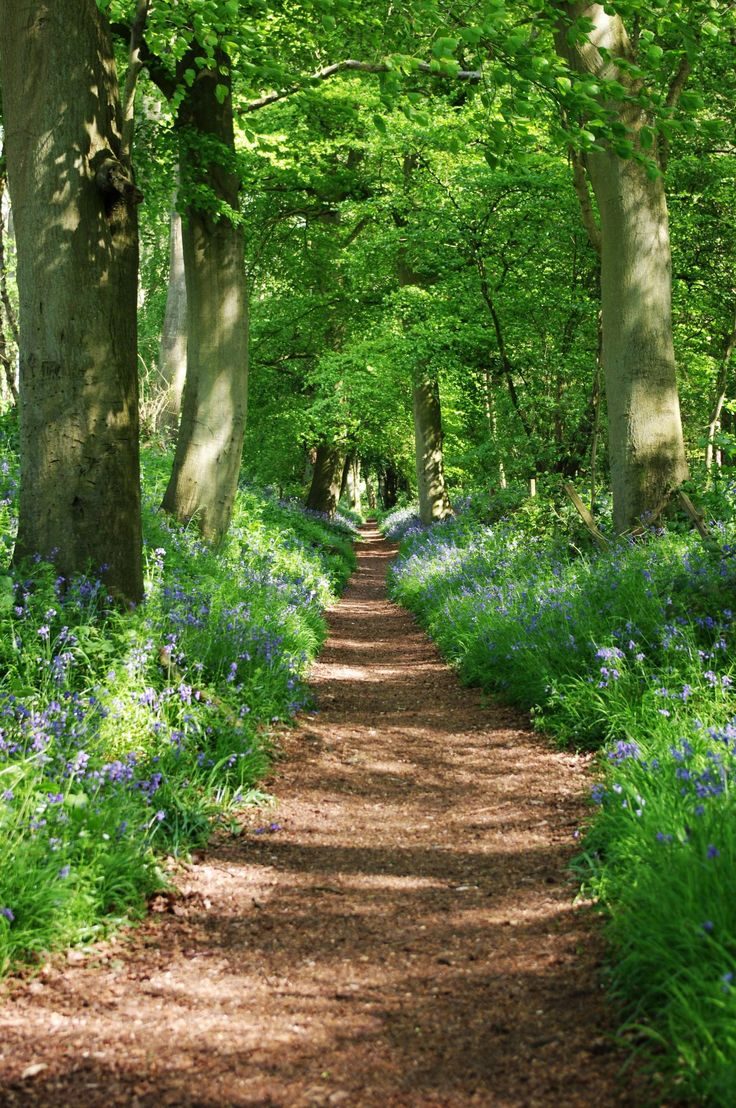 Wallingford, England, beautiful country lane