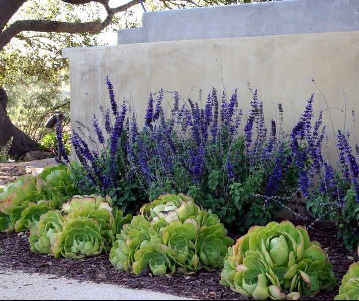 25 best ideas about low maintenance yard on pinterest for Low maintenance desert plants