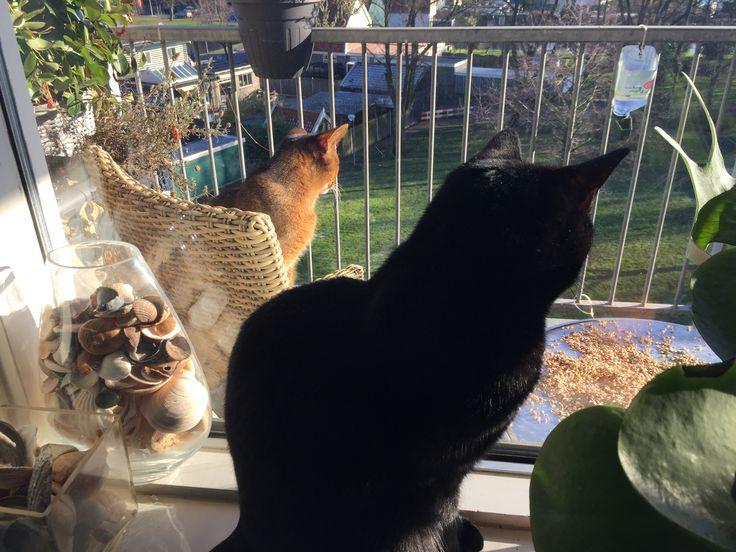 Vogeltjes kijken birdies