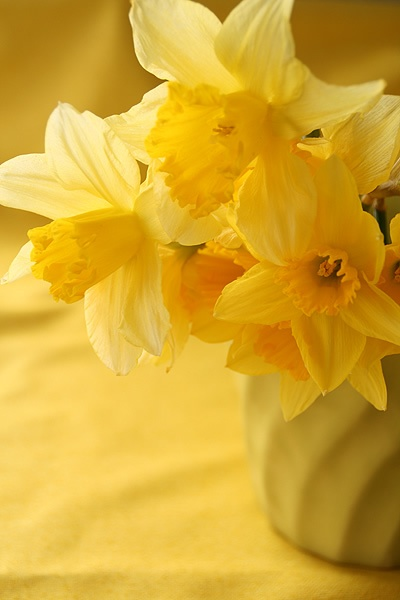 "lovely yellow daffodils of spring - plant in March ""Flowers always make people better, happier and more helpful; they are sunshine, food and medicine to the soul.""  ~ Luther Burbank, botanist, 1849-1926"