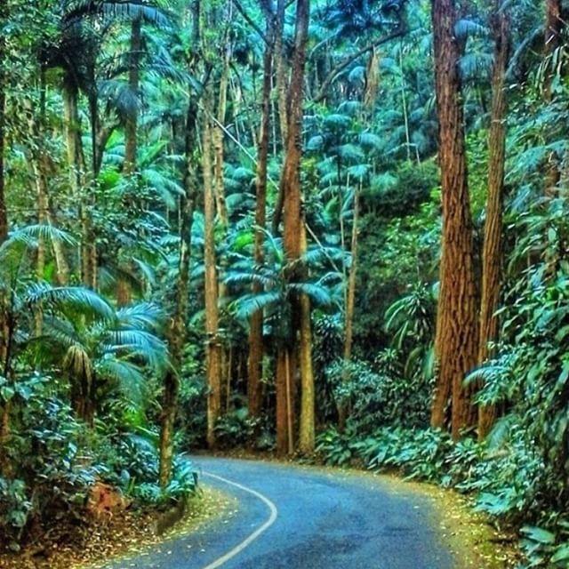 """@uber_rj's photo: """"O parque Nacional da Tijuca tem várias  trilhas legais para você curtir neste domingo. Chame um Uber para ir e voltar do parque sem preocupação. Foto de @suzetemelo"""""""