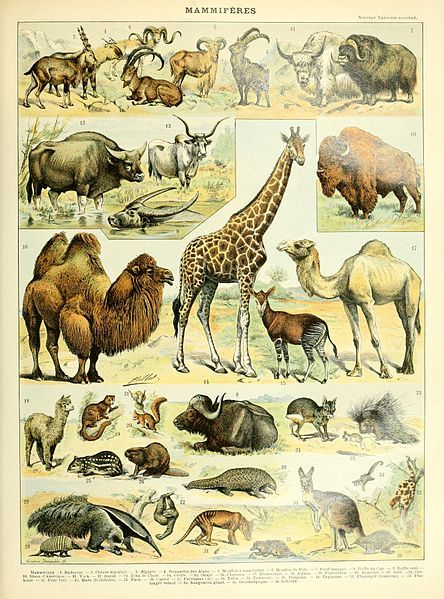 Mammals illustration of the Nouveau Larousse illustré, Adolphe Millot, public domain via Wikimedia Commons.