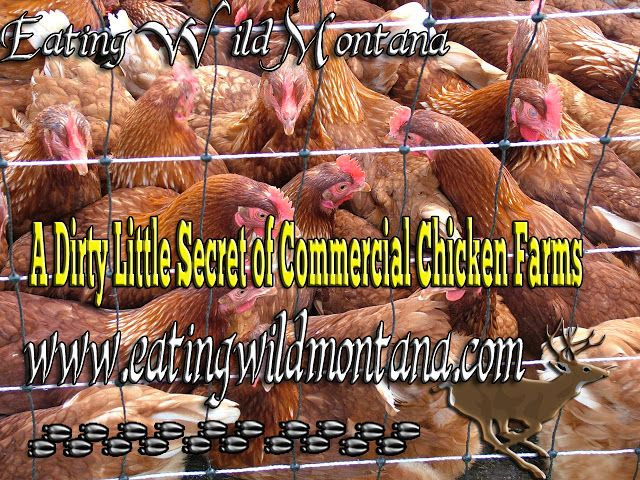 I received an email flyer in my inbox the other day about a sale from a big name poultry hatchery about a sale. I was looking at the diff...