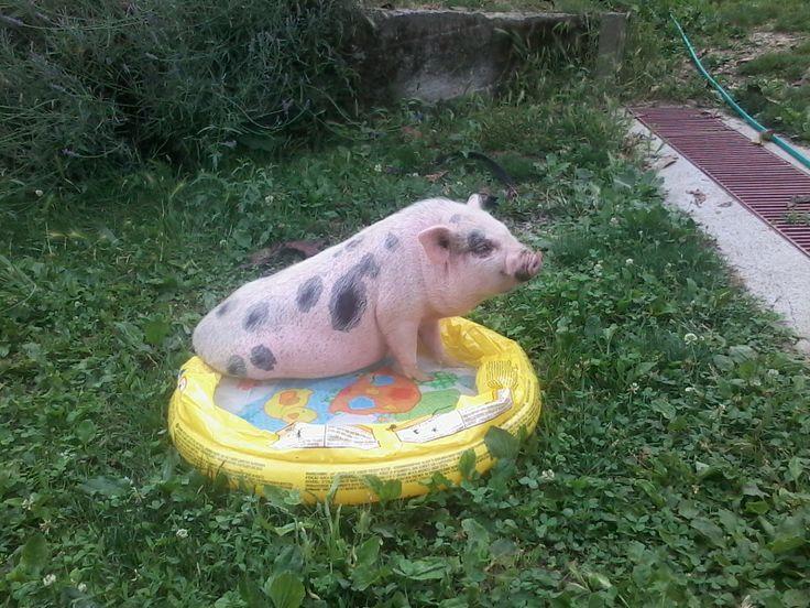 """Oscar in the """"swimmingpool"""""""