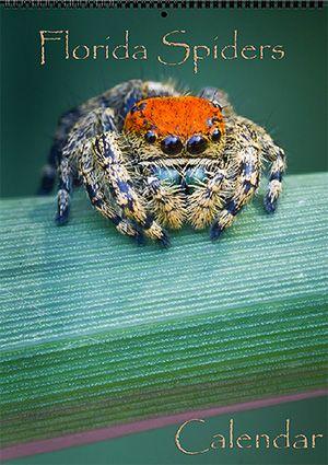 Florida Nature Calendars | John Koerner's Official Blog