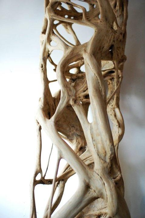 Strangler fig. A dramatic natural sculpture.