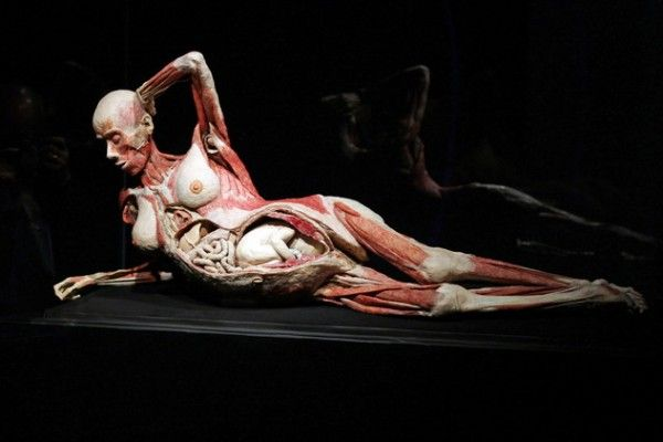 Hagens Human Cadavers Exhibition: Bodies From Chinese Prisons – chinaSMACK