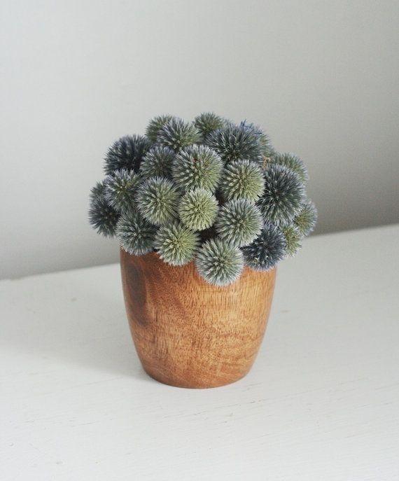 64 besten green bilder auf pinterest g rtnern blumen - Coole zimmerpflanzen ...