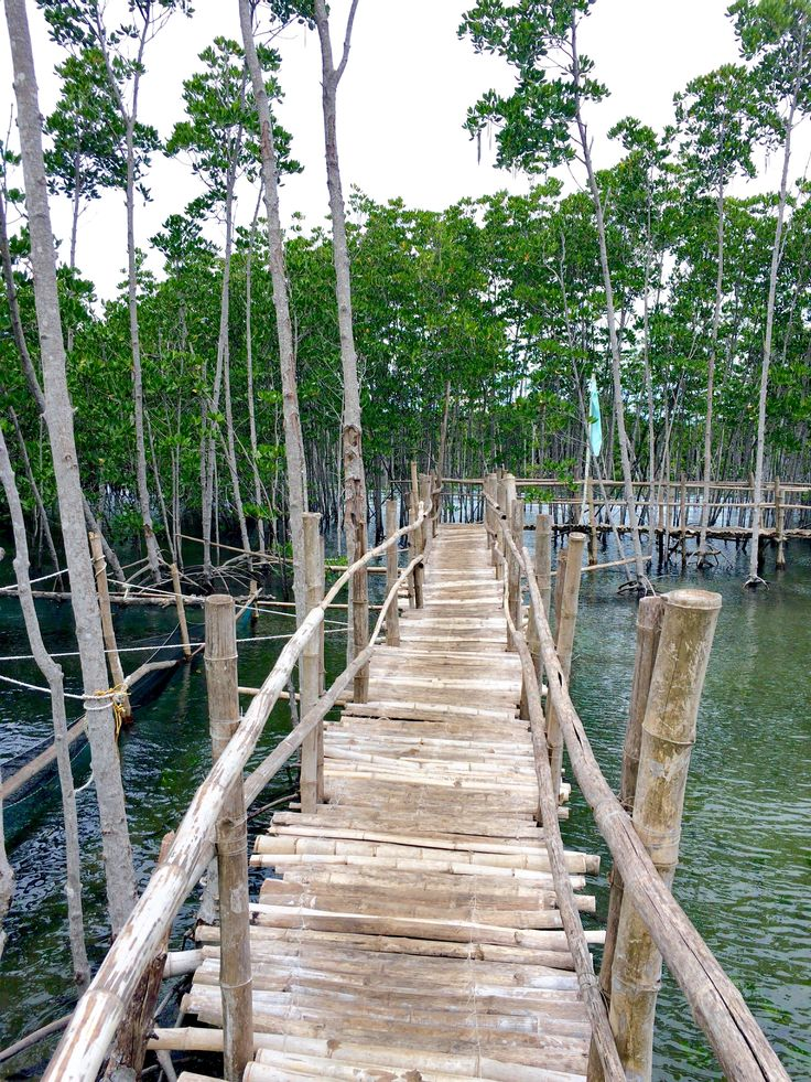 Bantayan mangrove forest 9 best Travel PH