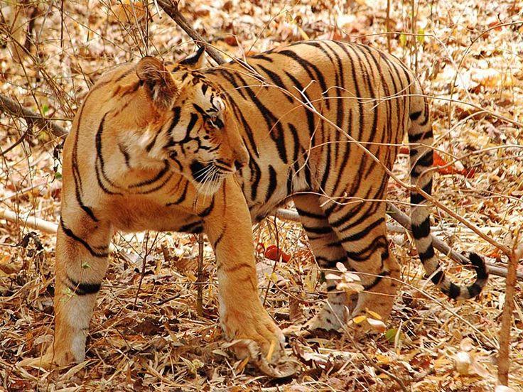 Nagzira Wildlife Sanctuary - in Maharashtra, India