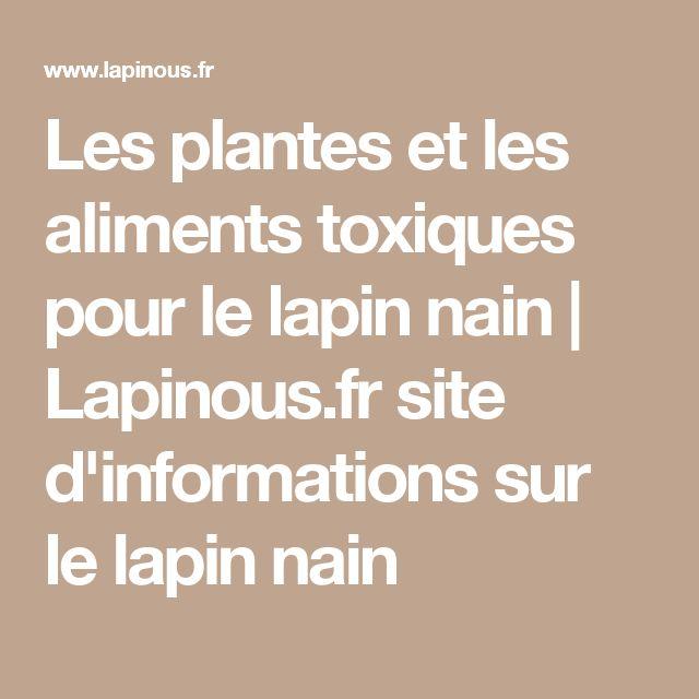 Les plantes et les aliments toxiques pour le lapin nain | Lapinous.fr site d'informations sur le lapin nain