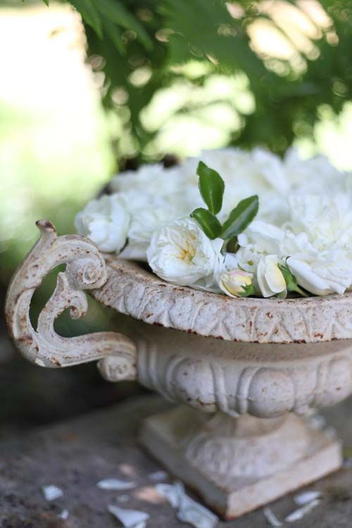 Les roses de la mariée - Grange de charme