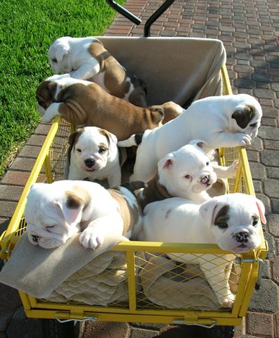 A crate FULL of Bully babies!