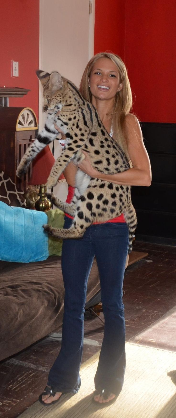 Savannah cat / ours are not this big! Though Miles is @ 13 pounds.