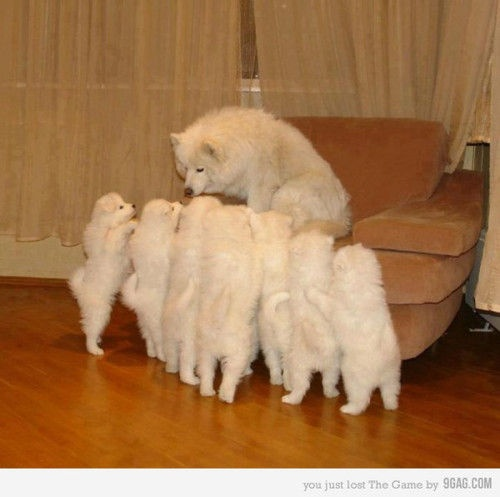 cute (dogs,cute): Bedtime Stories, Puppies, Funny Dogs, Old Dogs, Dogs Memes, Need A Break, Stories Time, Animal, Kid