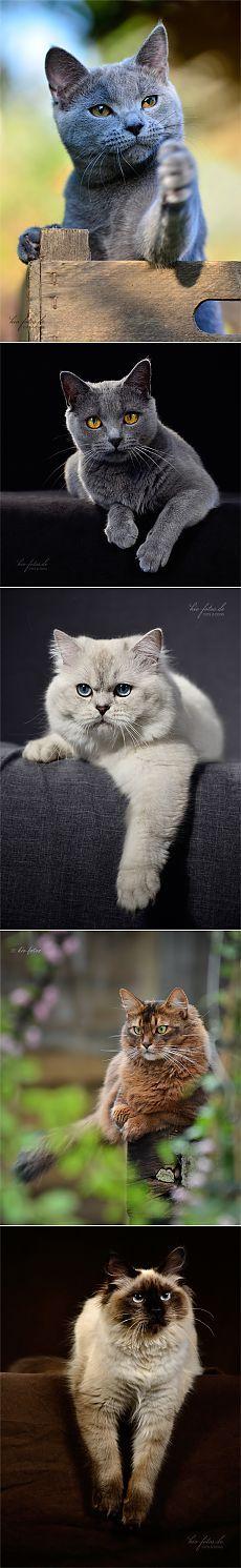 Красивые кошки от Kio Katzenfotos.