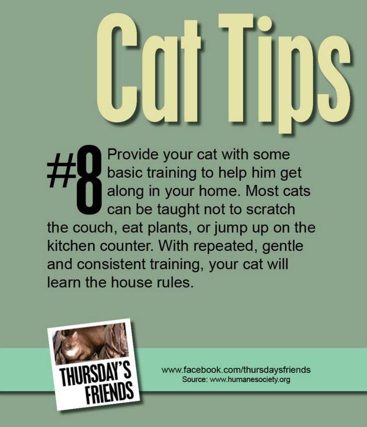 Cat care, Pet
