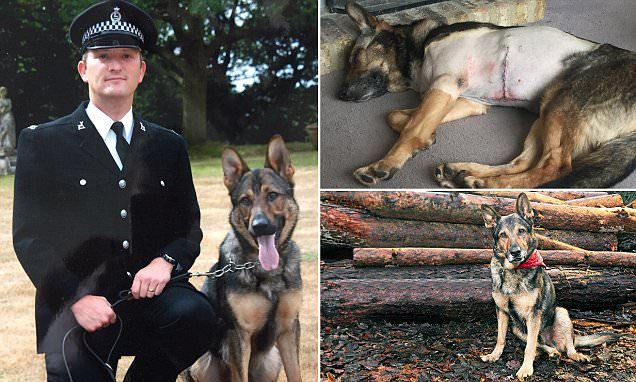 The bravest dog in Britain: The police canine who refused to let go