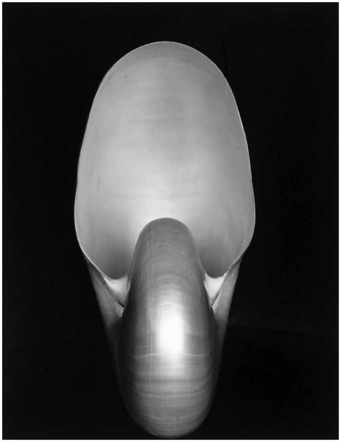 """Edward Weston, Nautilus  Questa non è una macchia di Rorschach, ma una delle foto simbolo della fotografia moderna. Scattata nel 1927, è costata ad Edward Weston lunghe ed estenuanti esposizioni. Risultato? Una foto che Tina Modotti ebbe a definire """"mistica ed erotica al tempo stesso"""". È stata venduta all'asta nel 2010 da Sotheby's a New York per $1,08 milioni."""