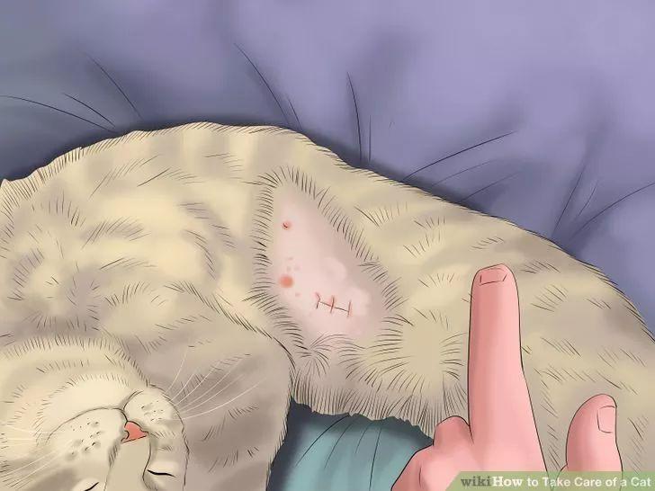Take Care of a Cat Cat neutering, Cat spray, Neuter