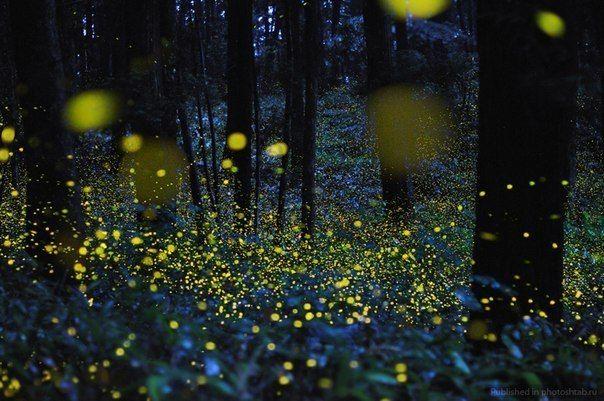 Светлячки в ночном лесу » Смешные Анекдоты Истории Цитаты Афоризмы Стишки Картинки прикольные Игры