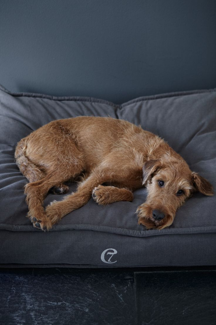 best 25 irish terrier ideas on pinterest terrier terriers and scruffy dogs. Black Bedroom Furniture Sets. Home Design Ideas