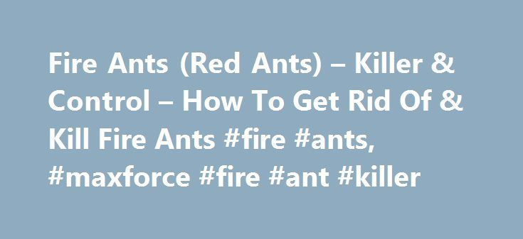 Fire Ants (Red Ants) – Killer & Control – How To Get Rid Of & Kill Fire Ants #fire #ants, #maxforce #fire #ant #killer http://nebraska.remmont.com/fire-ants-red-ants-killer-control-how-to-get-rid-of-kill-fire-ants-fire-ants-maxforce-fire-ant-killer/  # Fire Ants, or Red Ants, stand alone as one of the most dangerous and annoying ant species that can be found in the United States. They are the only species of ants (that originate in the U.S.) that are known to cause serious bites on humans…