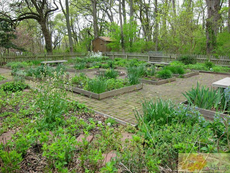 Conference House Park Tree Planting In Staten Island Ny: 29 Best Images About The Herb And Apothecary Garden On