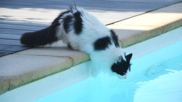 [Cats Video] Epic Cats Hate Falling in Water 2017 - Try not to laugh - Funny cats falling into water Part 2 -