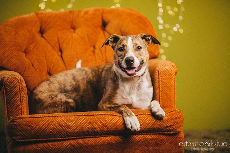 Adopt maverick on dog adoption terrier mix dogs