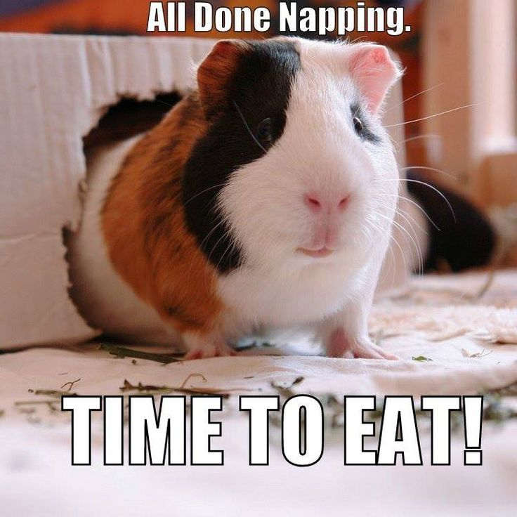 It's always time to eat. Even when I'm napping, I still dream about eating. Lol.