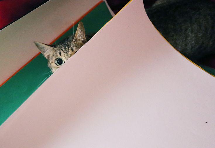 cat - #LinaFrida