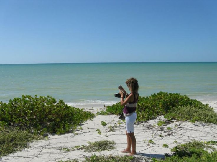 Lotes En Playas Virgenes Entre Isla Aguada Y Sabancuy: 464 Best Images About M E X I C O On Pinterest