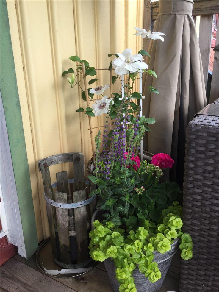Liten plantering på balkongen.