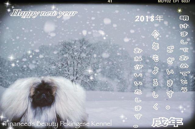 明けましておめでとうございます😊 2018年も宜しくお願い致します㊗️ 今年も去年を教訓に精進して参ります😊💕👍 今年は、スッキリな気持ちで 新年を迎えられた事に感謝ですね。ありがとうございます。  今年も大好きなPekingese&大好きな方々と素敵な1年にするよね〜㊗️㊗️㊗️☝️💕😘 #ペキニーズ  #ペキニーズ犬舎  #ペキニーズブリーダー  #ペキニーズフォーン  #ペキニーズパピー  #dog  #dogs  #dogshow  #dogstagram  #peki  #pekingese  #pekistagram  #愛犬  #ティナニーズビューティー  #ティナニーズビューティーペキニーズ  #あけましておめでとうございます  #大好き  #皆様  #スッキリ