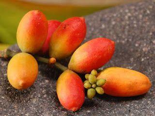 Melinjo Fruit pictures