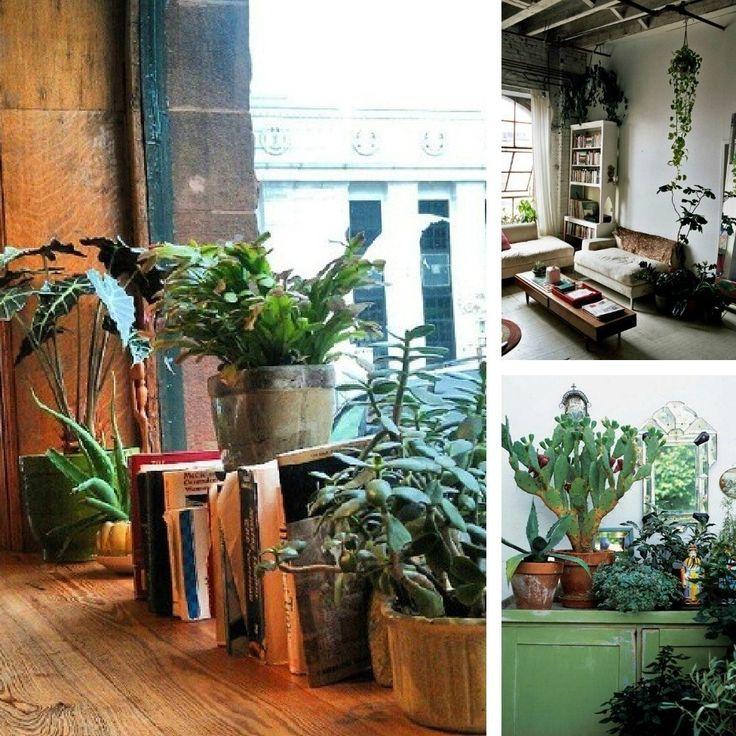 decorating dilemma house plants