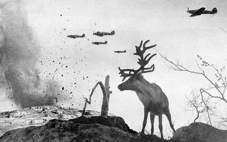 A shell-shocked reindeer in Murmansk as fighters attack during Operation Renntier, in a composite photograph by Yevgeniy Khaldei (1941)