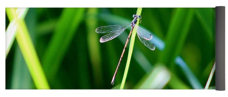 """Delicate Dragonfly Yoga Mat by Karen Silvestri.  This yoga mat is 24"""" x 72"""" in size and made from eco-friendly PVC.  It comes with black carrying bag and a 30-day money-back guarantee."""