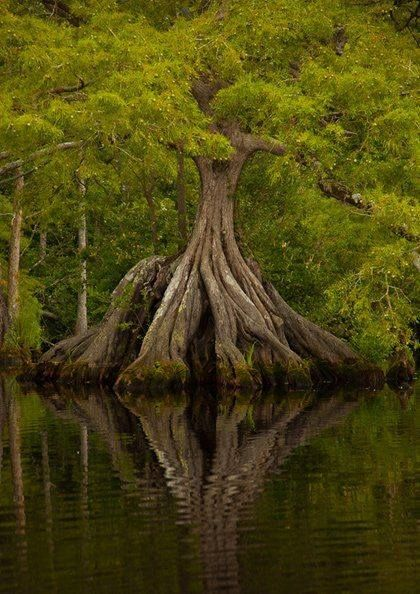Big tree water