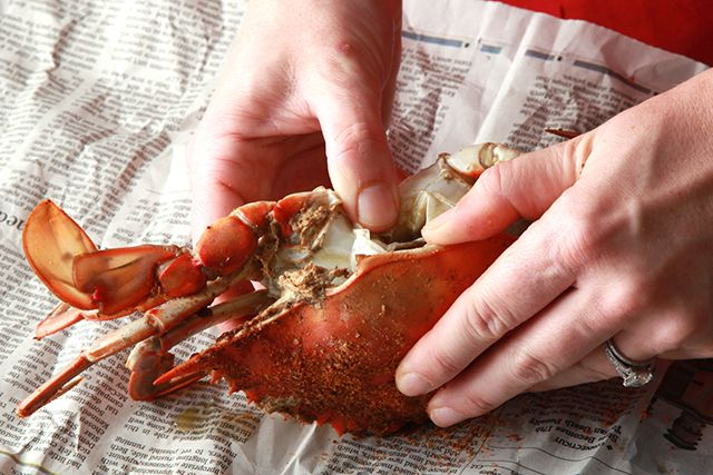 Basic Steamed Blue Crabs Recipe - CHOW.com