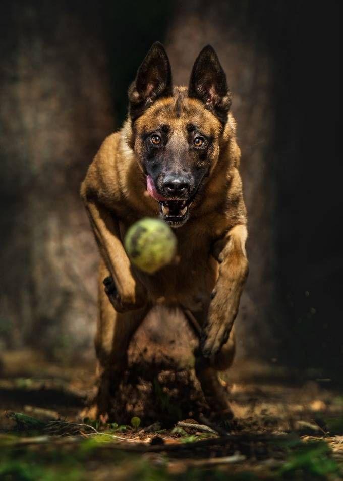Photo By Michael Higgins Dog Kennel Animals Large Dog Breeds