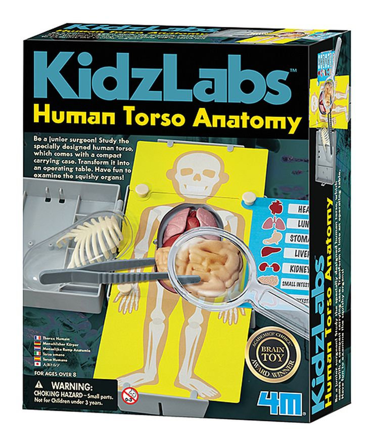 Take a look at this Human Torso Learning Kit today!