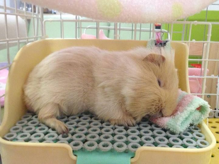 Nice To Know Other Piggies Sleep In Positions Like Mine