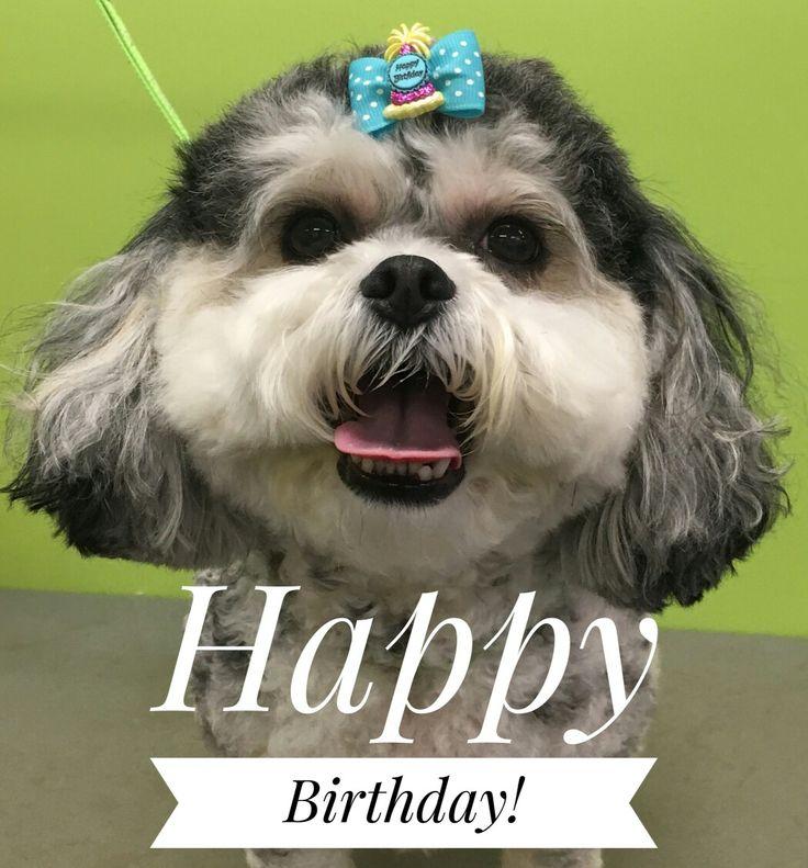 Happy 4th Birthday Lacey