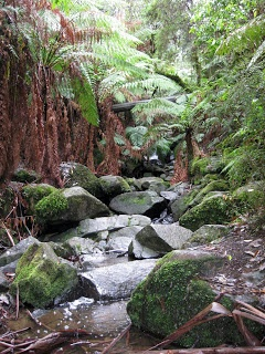 Sherbrooke Falls Circuit   Dandenong Ranges National Park   Kallista   Victoria