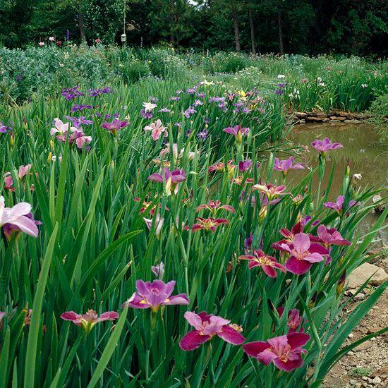 45 Best Iris Want Gardens Images On Pinterest Gardening